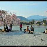 Kyoto, Japan<br />photo credit: facebook.com/visitkyoto