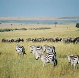 Maasai Mara, Kenya<br />photo credit: Wikipedia