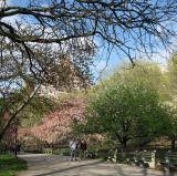 Riverside Park, New York City<br />photo credit: Wikipedia